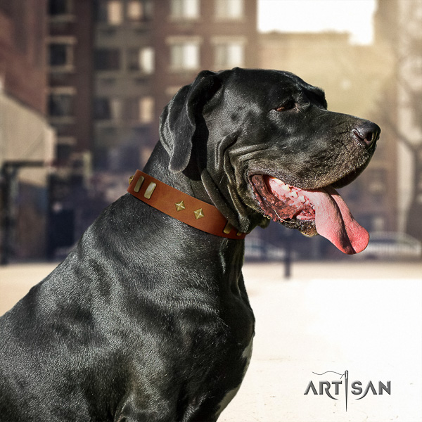 Great Dane comfortable wearing full grain natural leather collar with studs for your dog