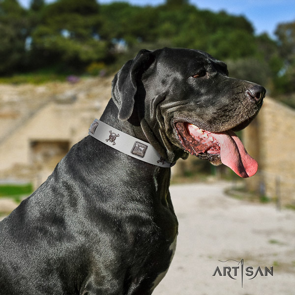 Great Dane comfy wearing full grain natural leather collar with embellishments for your pet