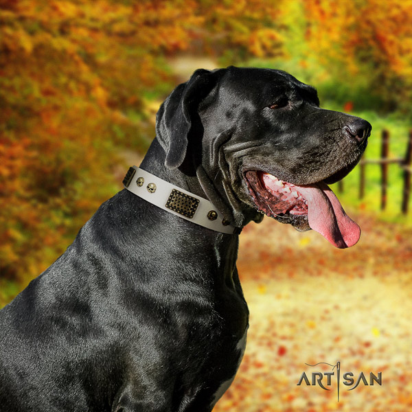 Great Dane handcrafted collar with remarkable studs for your four-legged friend