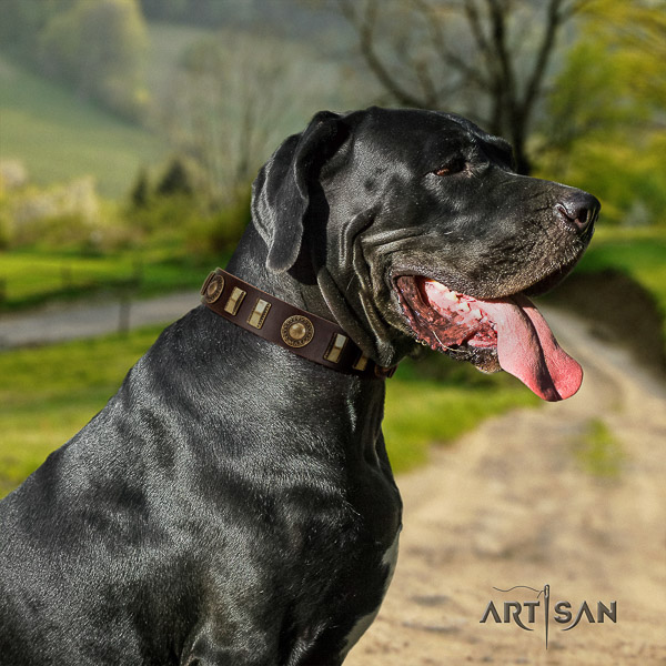 Great Dane basic training leather collar with adornments for your dog