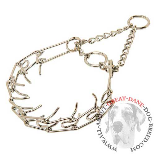 Chrome plated prong collar for Great Dane