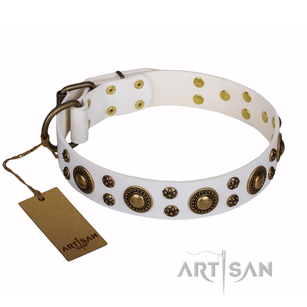 Stylish leather collar for your beloved canine