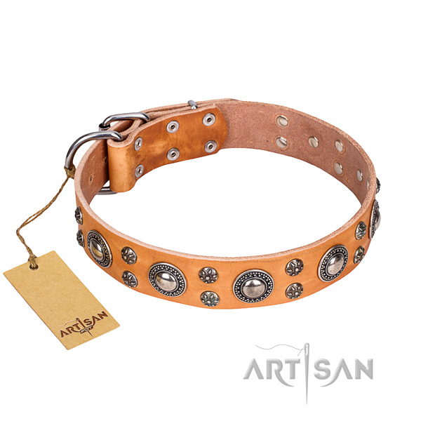 Strong leather dog collar with rust-resistant details