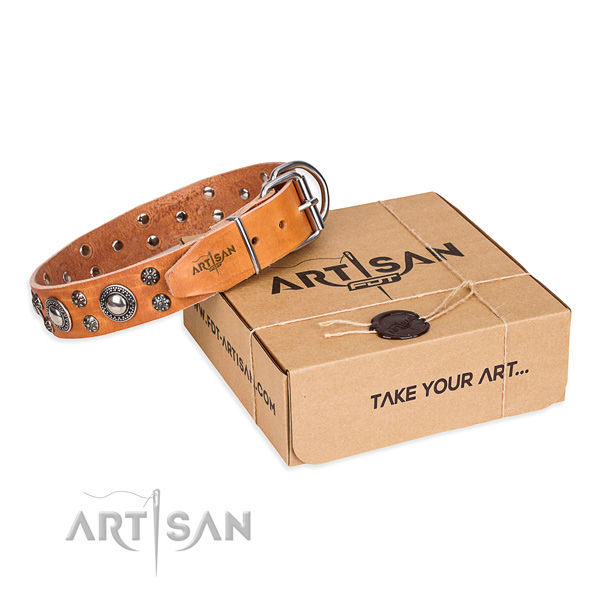 Casual leather dog collar with stunning adornments