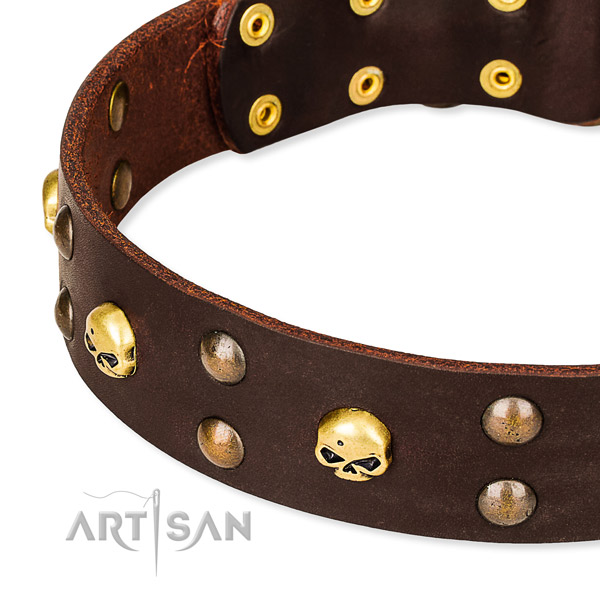 Day-to-day leather dog collar for reliable use