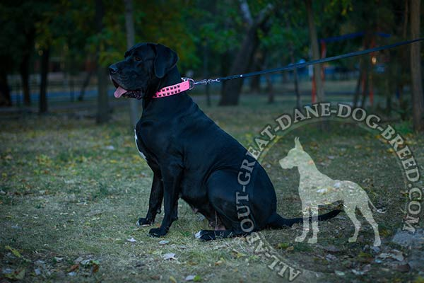 Great Dane Pink Leather Collar for Walking