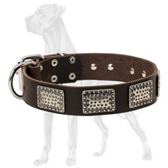 Plated Leather Dog Collar