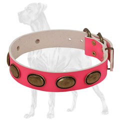 Plated Leather Dog Collar for Walking