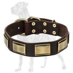 Leather Dog Collar with Riveted Plates
