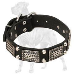 Riveted Leather Great Dane Collar