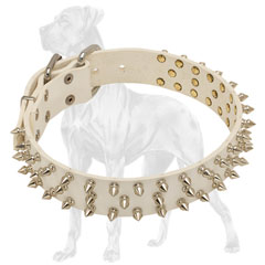 Spiked Leather Dog Collar with Spikes