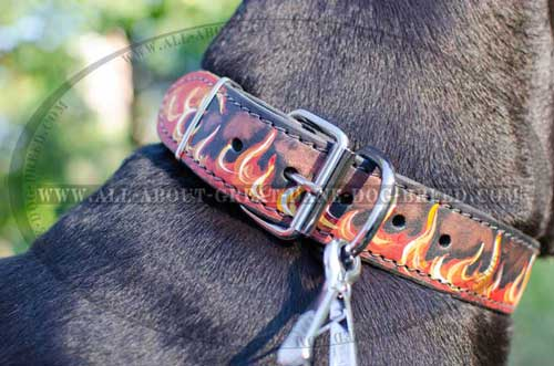 Fantastic Leather Dog Collar