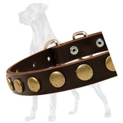 Non-Toxic Leather Dog Collar