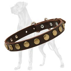 Leather Dog Collar with Brass Circles