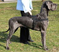 Great Dane Harnesses Large Dog Harnesses Big Dog