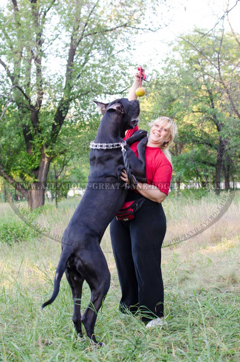 K9 Ball With Rope Activity Dog Toy For Great Dane Tt1