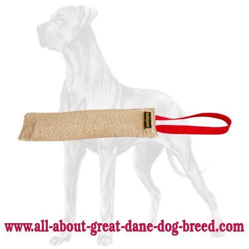 Durable stitched Great Dane bite tug