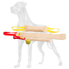 Great Dane puppy training becomes easier with this set