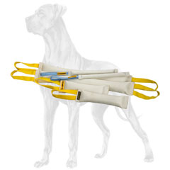Excellent fire hose set for Great Dane training