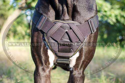 Cushion Chest Plate on Dog Harness