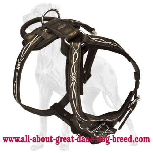D Ring on Barbed Wire Leather Dog Harness big barbed wire leather great dane harness [h1bw 1094 painted leather wire dog harness at bayanpartner.co