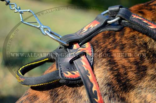 D-Ring on Painted Dog Harness
