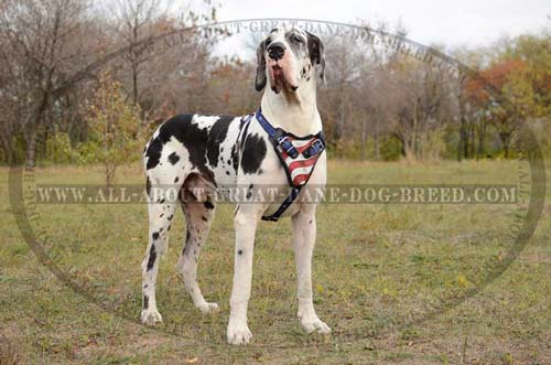 Great-Dane-Breed-Leather-Harness-American-Printed-Durable