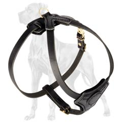 Great-Dane-Breed-Leather-Harness-Puppy-Hypoallergic