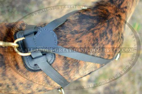 Rusr Resistant Leather Great Dane Dog Harness