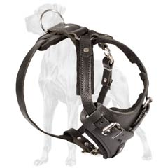 Heavy duty harness for Great Dane