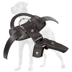 Practical Great Dane harness with handle