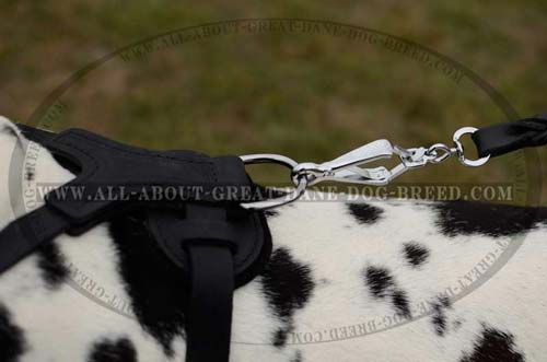 Exclusive Dog Harness