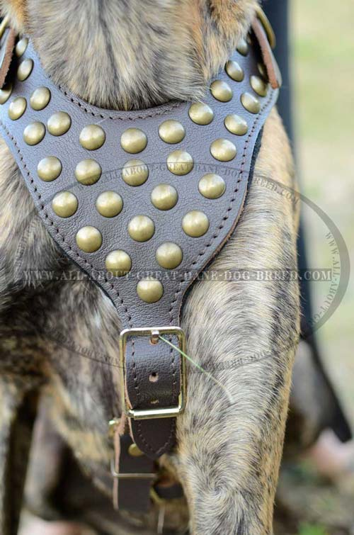 Extremely Comfortable Leather Dog Harness
