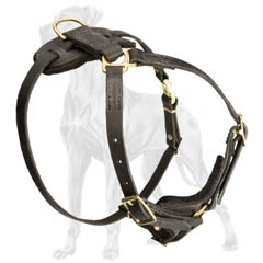 Stylish Leather Great Dane Harness