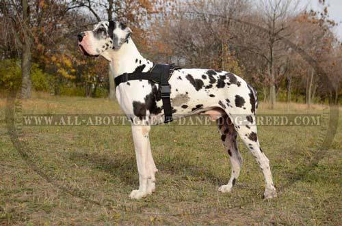 Great-Dane-Dog-Nylon-Harness-Light-Strong