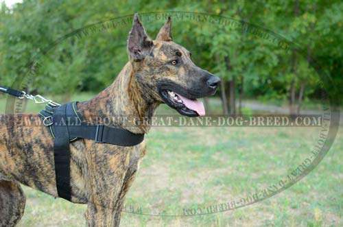 Practical nylon Great Dane harness