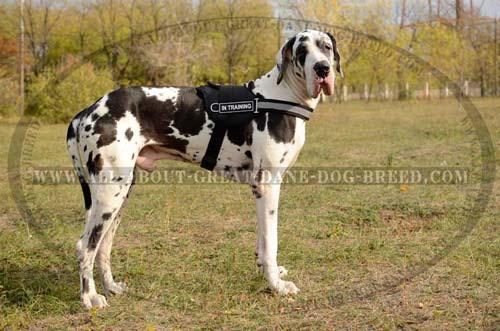 Great-Dane-Dog-Nylon-Harness-Waterproof-High-Quality