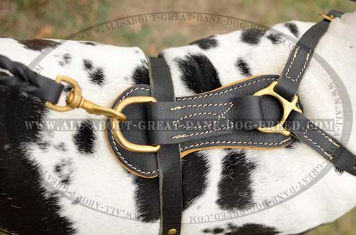 Hypoallergic Studded Leather Great Dane Harness