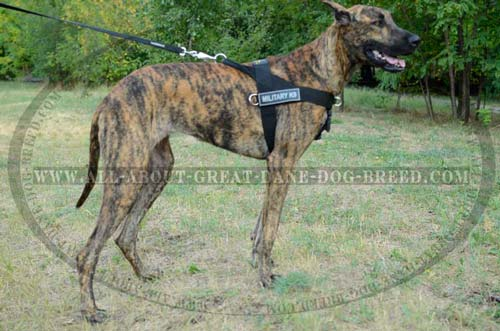 Comfortable Nylon Great Dane Harness