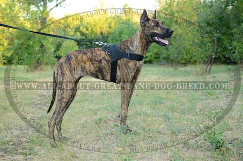 Durable walking nylon Great Dane harness
