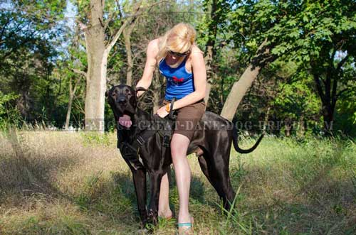 Padded Nylon Great Dane Harness