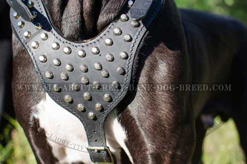 Decorated Leather Great Dane Chest Plate of Dog Harness