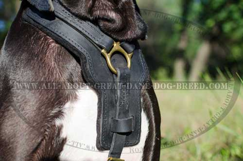 Padded Chest Plate of Leather Great Dane Harness