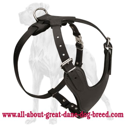 Heavy Duty Leather Harness for Great Dane