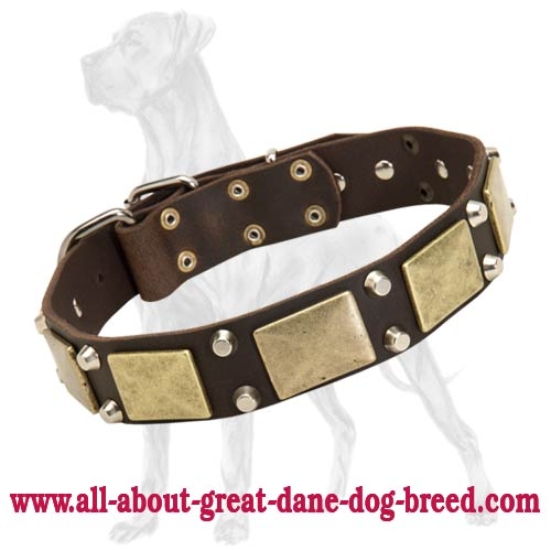 Great Dane Leather Studded Collar | Brass Plates