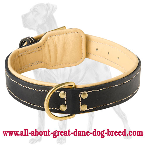 Great Dane Nappa Padded Leather Collar | Brass Plated Hardware
