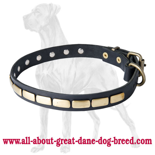 Reliable Great Dane Plated Leather Collar | Brass Decoration