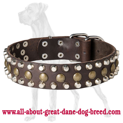 Custom Studded Leather Dog Collar for Great Dane