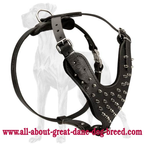 Leather Great Dane Harness with Nickel Plated Spikes