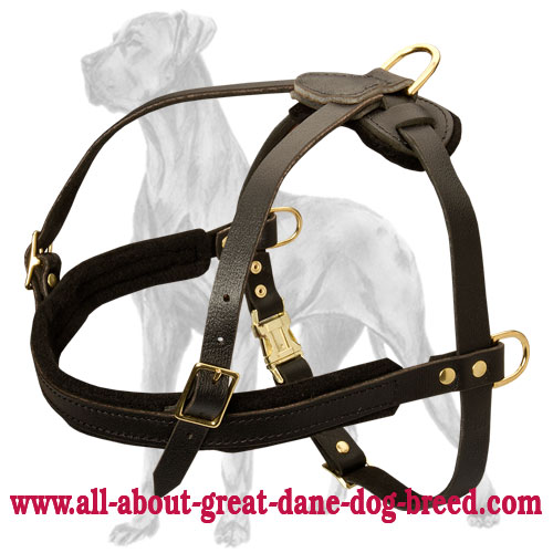 Leather Tracking Harness for Great Dane - Pulling Dog Harness